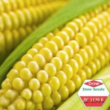 Семена кукурузы Dow Agro ДС1176Б, ФАО 250