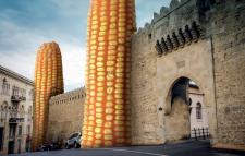 Семена кукурузы СИ Фортаго, ФАО 260