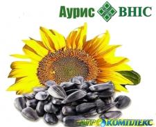 Семена подсолнечника Аурис, ВНИС, экстра, гранстар