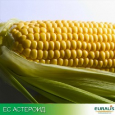 Семена кукурузы ЕС Астероид (Украина), ФАО 290