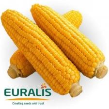 Семена кукурузы ЕС Сенсор (Украина), ФАО 370