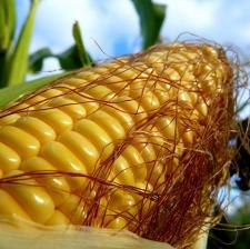 "Семена кукурузы ""ЭС ТРИО"""