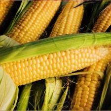 """Семена кукурузы """"ФРУКТИС"""""""