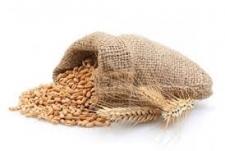 Пшеница озимая Нива Одесская (ЭЛИТА)