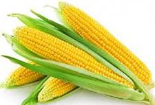 Семена кукурузы Даниил ФАО 280, ООО «Научно-производственная агрофирма «Степная»