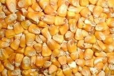 Кукуруза кормавая фасованная 50кг
