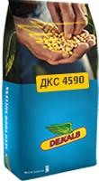 Кукуруза ДКС 4590, ФАО 360, 2016 г.