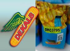 Кукуруза ДКС 3795, ФОА 250, 2016 г.
