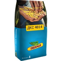 Кукуруза ДКС 4014, ФАО 310, 2016 г.
