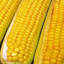 """Семена кукурузы """"НС - 101 NEW"""" НЕРТУС"""