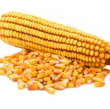 """Семена кукурузы """"НС - 400"""" НЕРТУС"""