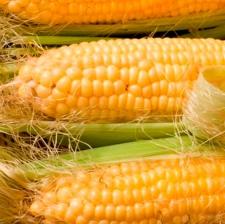 """Семена кукурузы """"НС - 2014"""""""