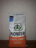 Семена подсолнечника Р62LL109 новий