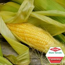 Семена кукурузы Dow Agro Сурвивор, ФАО 250