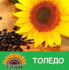 Семена подсолнечника Толедо, толерантный к гранстару, экстра